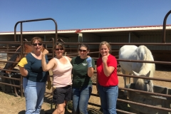 3-2-1-volunteering-Colorado-therapeutic-riding-center